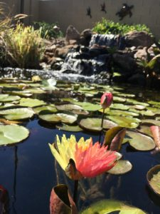 Pond With Flowers and Lili Pads