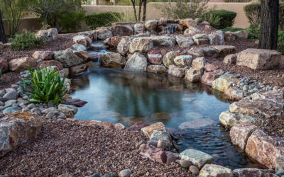Reasons Why You Need a Pond Filtration System