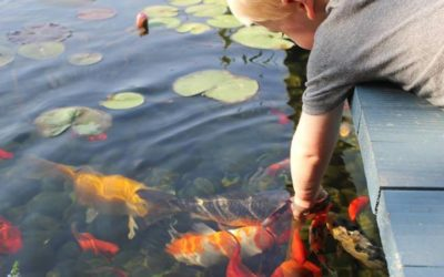 International Water & Garden Showcase