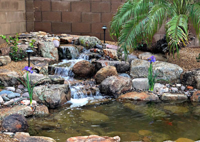 Koi Pond in Gilbert