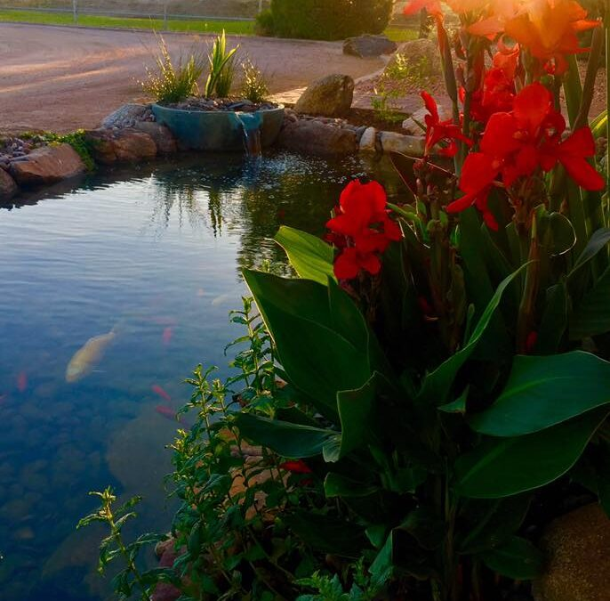 Scottsdale Pond Repair Companies