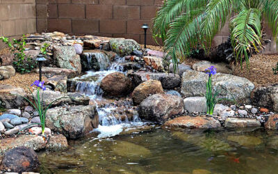 Simple Tips for Summer Pond Care